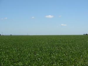 plantaciones-de-soja--1024x768
